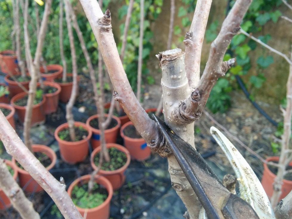 La poda de los frutales qu c mo cu ndo y por qu huerters foodies - Cuando se plantan los arboles frutales ...