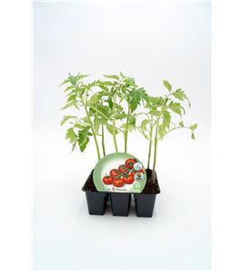 Pack Tomate Cherry Redondo 6 Ud. Solanum lycopersicum - 02031077 (1)