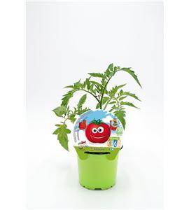 Tomate Muchamiel KIDS M-10,5 Solanum lycopersicum - 02034007 (1)