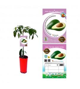 Aguacate - Persea americana - 03050003 (0)