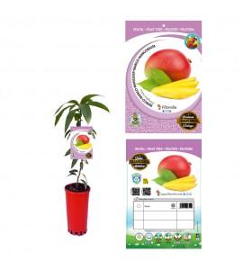 Mango - Mangifera indica - 03050100 (0)