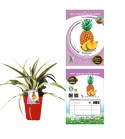 Piña Ananas - Ananas comosus