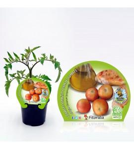 Tomate Colgar M-10,5 Solanum lycopersicum - 02025008 (1)