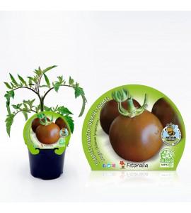Tomate Negro M-10,5 Solanum lycopersicum - 02025015 (1)