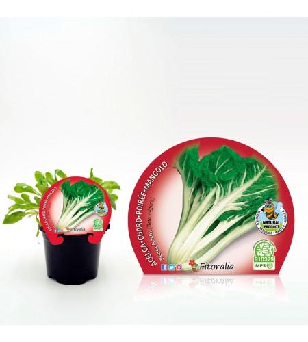 Acelga Verde M-10,5 Beta vulgaris - 02025150 (1)