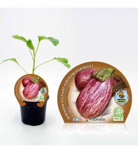 Berenjena Gandía M-10,5 Solanum melongena - 02025028 (1)