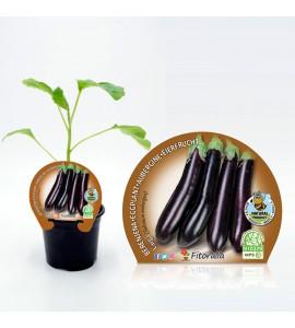 Berenjena Larga Negra M-10,5 Solanum melongena - 02025032 (0)