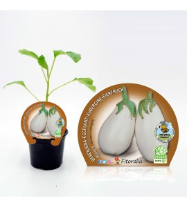 Berenjena Redonda Blanca M-10,5 Solanum melongena - 02025030 (1)