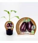 Berenjena Redonda Negra M-10,5 Solanum melongena