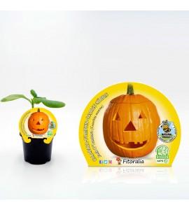 Calabaza Halloween M-10,5 Cucurbita maxima - 02025130 (1)