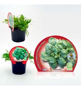 Espinaca M-10,5 Spinacia oleracea - 02025059 (1)