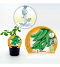 Guisante Super Snap Zuccola M-10,5 Pisum sativum
