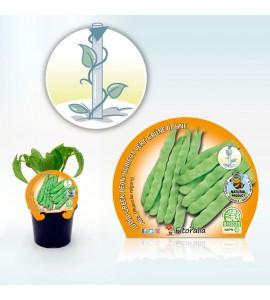 Judía Alta M-10,5 Phaseolus vulgaris - 02025077 (1)