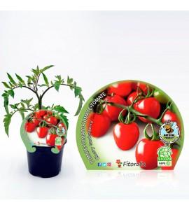 Tomate Cherry Garden Berry M-10,5 Solanum lycopersicum - 02025026 (1)