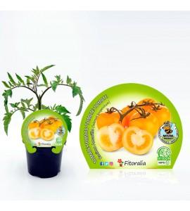 Tomate Racimo Amarillo M-10,5 Solanum lycopersicum - 02025115 (1)