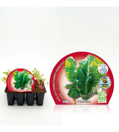 Pack Acelga Amarilla de Lyon 12 Ud. Beta vulgaris - 02031009 (1)