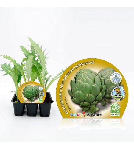 Pack Alcachofa 6 Ud. Cynara scolymus - 02031045 (1)