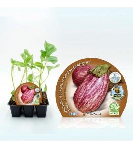 Pack Berenjena Gandía 6 Ud. Solanum melongena - 02031066 (1)