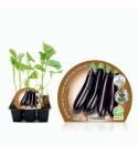 Pack Berenjena Larga Negra 6 Ud. Solanum melongena