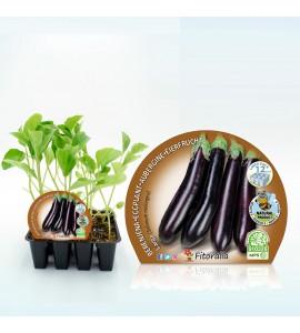 Pack Berenjena Larga Negra 12 Ud. Solanum melongena - 02031021 (1)