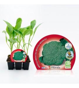 Pack Brócoli 6 Ud. Brassica oleracea var. italica - 02031035 (1)