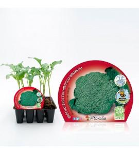 Pack Brócoli 12 Ud. Brassica oleracea var. italica - 02031007 (1)