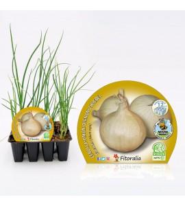 Pack Cebolla De Fuentes 12 Ud. Allium cepa - 02031027 (1)