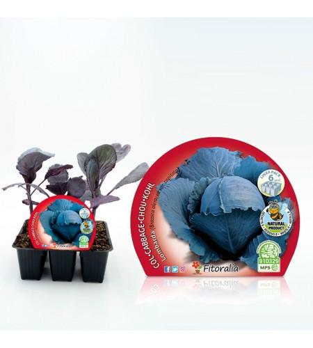Pack Col Lombarda 6 Ud. Brassica oleracea var. capitata - 02031040 (1)