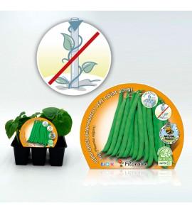 Pack Judía Mata Baja 6 Ud. Phaseolus vulgaris - 02031030 (1)