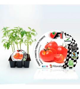 Pack Tomate Jack F1 6 Ud. Solanum lycopersicum - 02038001 (1)