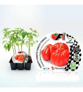 VIP Pack Tomate Híbrido Bodar F1 6 Ud. Solanum lycopersicum