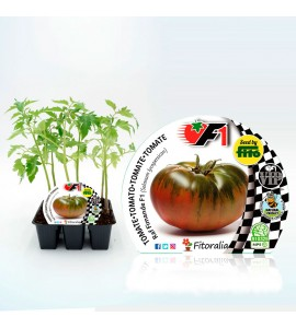 VIP Pack Tomate Híbrido Raf Fimande F1 6 Ud. Solanum lycopersicum