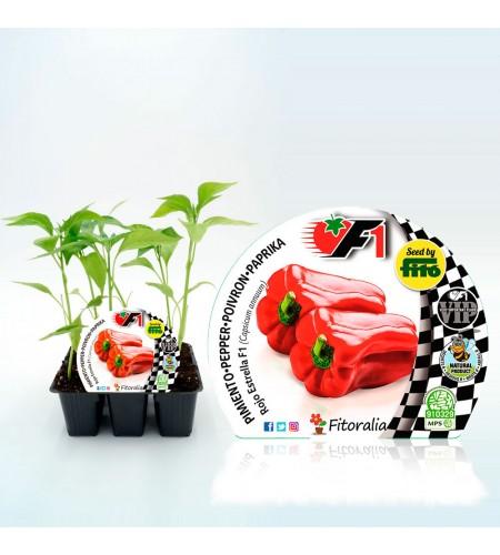 VIP Pack Pimiento Híbrido Rojo Estrella F1 6 Ud. Capsicum annuum