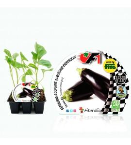 VIP Pack Berenjena Híbrido Seven F1 6 Ud. Solanum melongena