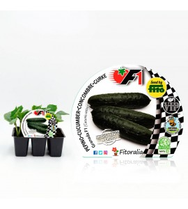VIP Pack Pepino Híbrido Beautiful F1 6 Ud. Cucumis sativus