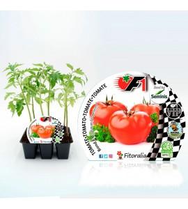 Pack Tomate Bodar F1 6 Ud. Solanum lycopersicum - 02038005 (1)