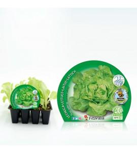 Pack Lechuga Trocadero 12 Ud. Lactuca sativa - 02031033 (1)