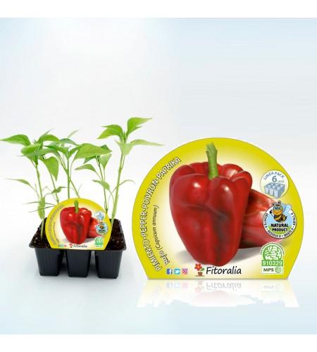 Pack Pimiento Rojo 6 Ud. Capsicum annuum - 02031059 (1)