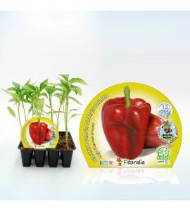 Pack Pimiento Rojo 12 Ud. Capsicum annuum - 02031020 (1)