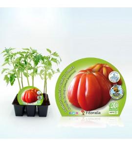 Pack Tomate Corazón De Buey 6 Ud. Solanum lycopersicum - 02031051 (1)