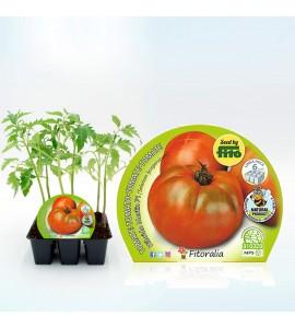 Pack Tomate Ensalada Híbrido 6 Ud. Solanum lycopersicum - 02031050 (1)