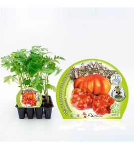 Pack Tomate Montserrat 12 Ud. Solanum lycopersicum - 02031015 (1)
