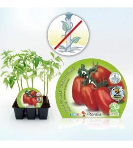 Pack Tomate Pera Mata Baja 6 Ud. Solanum lycopersicum - 02031056 (1)