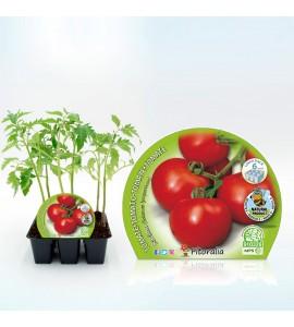 Pack Tomate Racimo 6 Ud. Solanum lycopersicum - 02031057 (1)