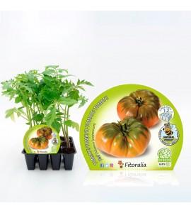 Pack Tomate Raf 12 Ud. Solanum lycopersicum - 02031017 (1)