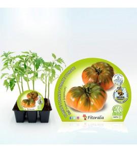 Pack Tomate Raf 6 Ud. Solanum lycopersicum - 02031054 (1)