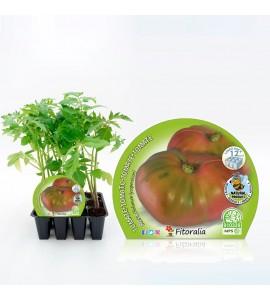Pack Tomate Rosa 12 Ud. Solanum lycopersicum - 02031018 (1)