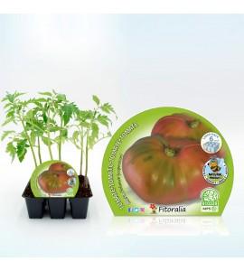 Pack Tomate Rosa 6 Ud. Solanum lycopersicum - 02031055 (1)