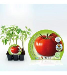 Pack Tomate Tres Cantos 6 Ud. Solanum lycopersicum - 02031058 (1)