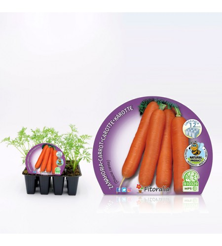 Pack Zanahoria 12 Ud. Daucus carota - 02031092 (1)